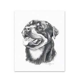 5 Rottweiler Note Cards Image