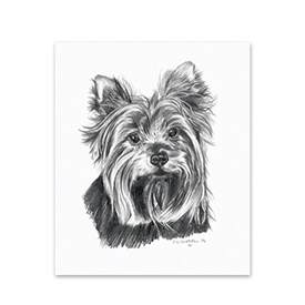 5 Yorkshire Terrier Note Cards Image