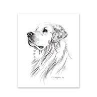 Clearance |  | 5 Golden Retriever Note Cards