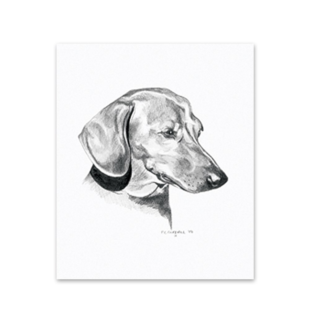 5 Dachshund Note Cards Rx Plus