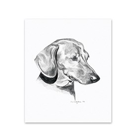 5 Dachshund Note Cards Image