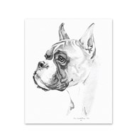 Clearance |  | 5 Boxer Note Cards