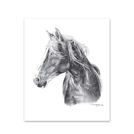 5 Horse Head Note Cards Image