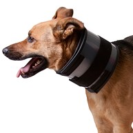 Surgical-Accessories-E-Collars |  | Bite Free Protective Collar